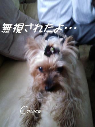 DSC_0325_convert_20130420191523.jpg