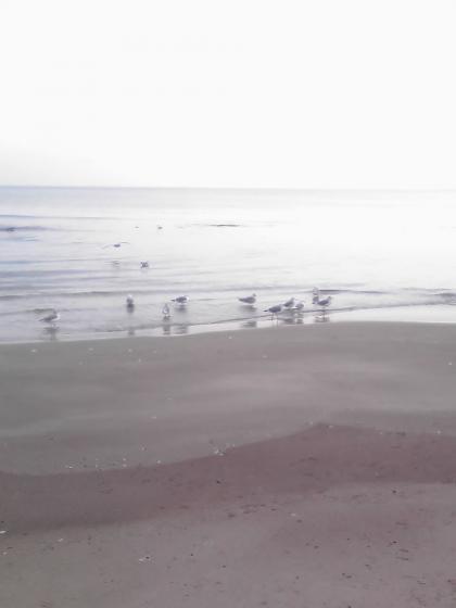 海鳥の群れ2
