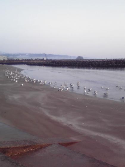 海鳥の群れ
