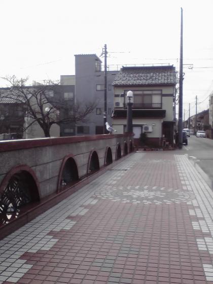 和平橋のカモメ