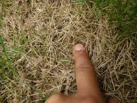 芝生のダメージ