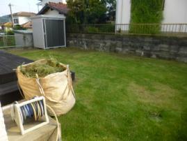 芝生の手入れ 雑草処理後