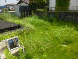 芝生の管理 雑草処理前
