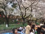 2013年3月28日上野公園の桜その1