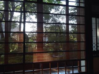 木漏れ日を見ながら…