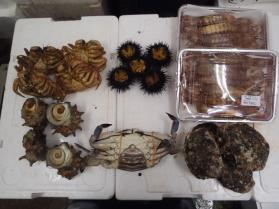 9鮮魚セット2013531