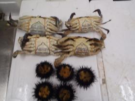 14鮮魚セット2013531