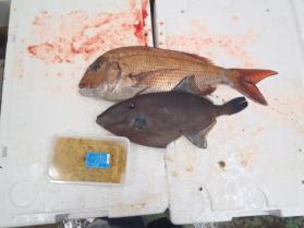 13鮮魚セット2013531