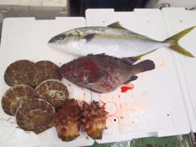 2鮮魚セット2013629