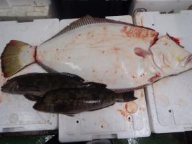 7鮮魚セット2013629