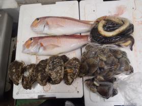8鮮魚セット2013629