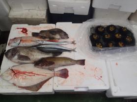 4鮮魚セット2013731