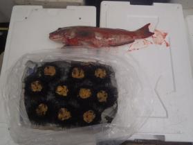 8鮮魚セット2013731