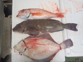 9鮮魚セット2013731