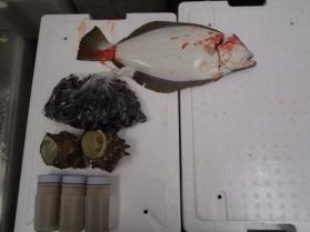 1鮮魚セット2013831