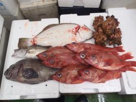 2鮮魚セット2013831