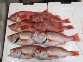 3鮮魚セット201392