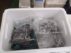 10鮮魚セット201392