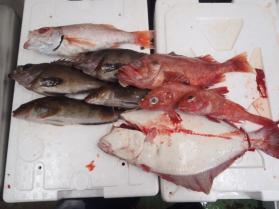 6鮮魚セット201392