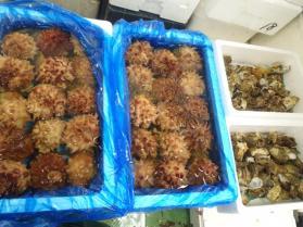 8鮮魚セット201392