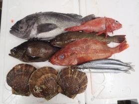 11鮮魚セット201392
