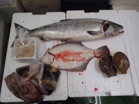 1鮮魚セット201393