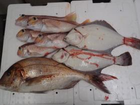 2鮮魚セット201393