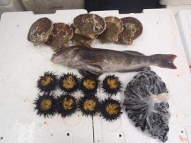 15鮮魚セット201393