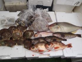 14鮮魚セット201393