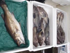 6鮮魚セット201394