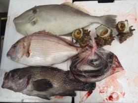 9鮮魚セット201394