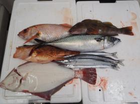 5鮮魚セット201397