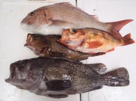5鮮魚セット201399