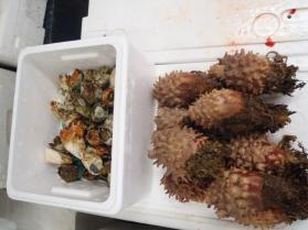 7鮮魚セット201399