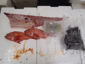 2鮮魚セット2013912