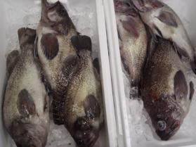 7鮮魚セット2013912