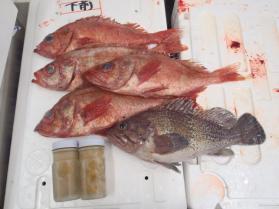 15鮮魚セット2013912