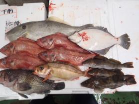11鮮魚セット2013912