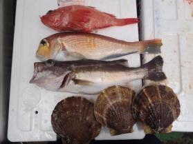 13鮮魚セット2013912