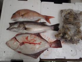 2鮮魚セット2013913