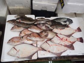 6鮮魚セット2013913