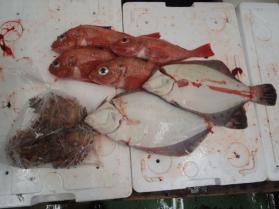 7鮮魚セット2013913