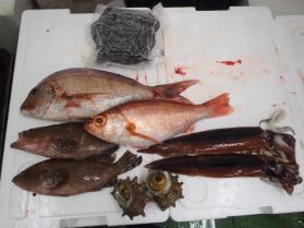 2鮮魚セット2013914