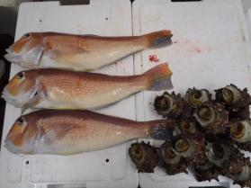 6鮮魚セット2013914