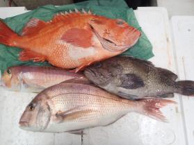 8鮮魚セット2013914