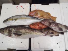 5鮮魚セット2013917
