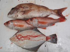 10鮮魚セット2013917
