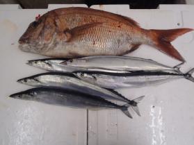 6鮮魚セット2013917