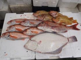 9鮮魚セット2013917