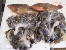 9鮮魚セット2013919
